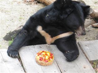 Medvědárium